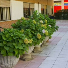 3 flores jardin